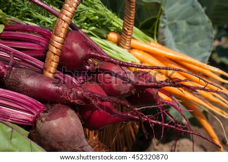 Fresh Young Vegetables. Fresh Carrots And Beets In Wicker Basket On Vegetable Garden Summer Close Up. Healthy And Wholesome Food. Selective Focus.