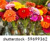 Fresh Zinnias for Sale at a local farmer's market - stock photo