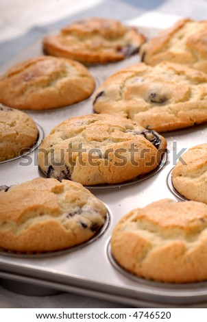 Freshly baked blueberry muffins in a muffin pan