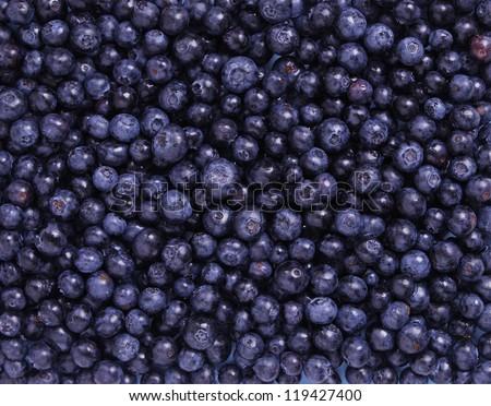 Freshly Blueberries - stock photo