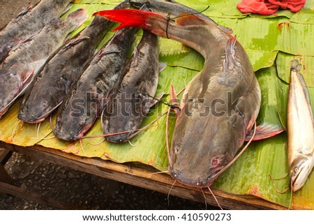 Freshly caught catfish on palm leaf in a morning fish market, Luang Prabang, Laos