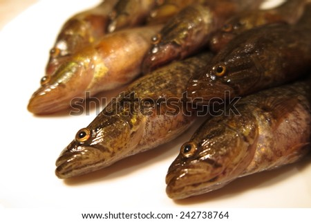 Freshly caught Chinese sleepers (Perccottus glenii) on a plate  - stock photo