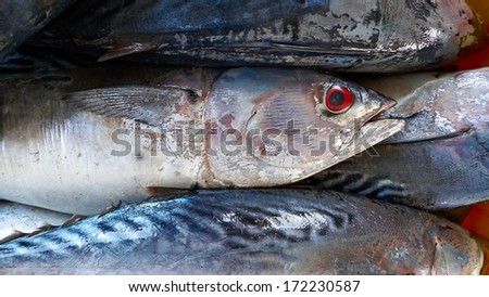 Freshly caught fish. Abstract background.