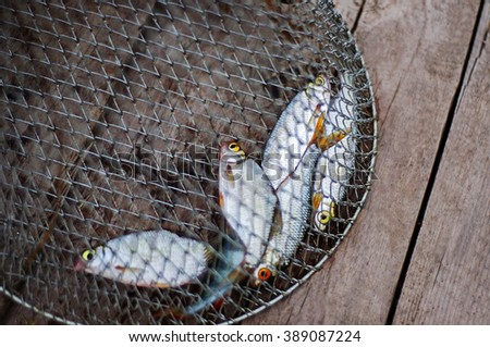 Freshly caught fish in net basket on wooden background