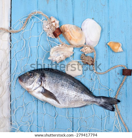 freshly caught fish - sea bream fish with Shells and net on blue wooden background - stock photo