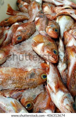 Freshly caught fish stored on ice in preparation to be sold at a fish market or processed at a fish factory. - stock photo