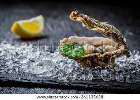 Freshly caught oysters on crushed ice - stock photo