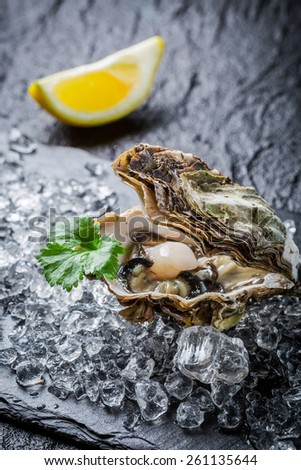 Freshly caught oysters on ice - stock photo