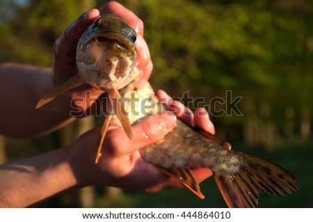 Freshly caught pike in fisherman's hands - stock photo