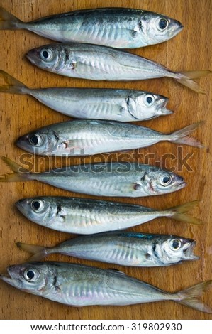 freshly caught raw fish (mackerel) - stock photo
