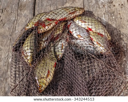 Fishing nets stock images royalty free images vectors for Fish nets near me