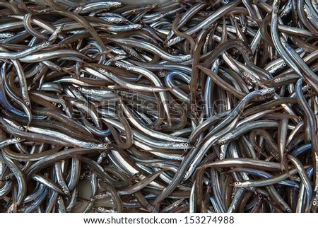 Freshly caught sea fish for sale at a fish market - stock photo