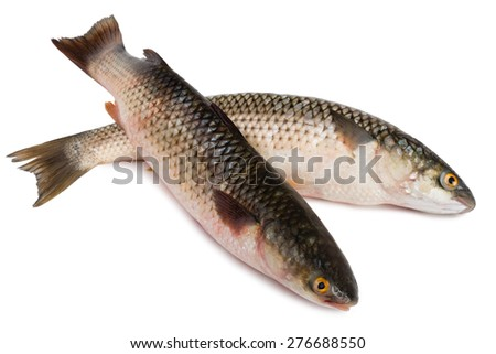 Freshly caught sea fish Mullet or Haarder, isolated on white - stock photo