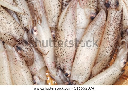 freshly caught squid