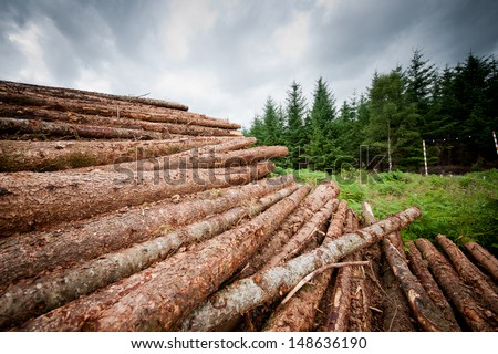 Freshly chopped tree logs stacked up on top of each other in a pile - stock photo