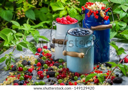 Freshly collecting wild berry fruits - stock photo