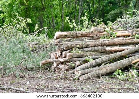 Freshly cut timber on a clearcut area to develop new land