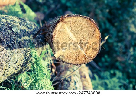 Freshly cut tree logs piled up near a forest road/retro filter - stock photo