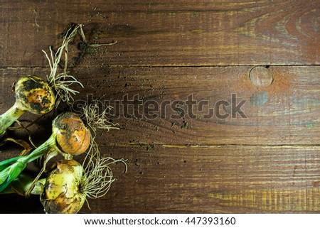 Freshly dug onion bulbs on old wooden table background - stock photo