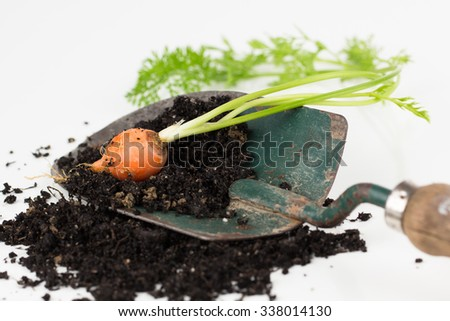 Freshly dug orange garden carrot with greens, resting on dark rich soil and a hand trowel.