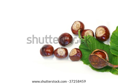 freshly fallen chestnuts with a leaf on a white background