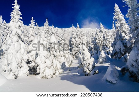 Freshly fallen snow blanketing spruce trees on Mt. Mansfield, Stowe, Vermont, USA - stock photo