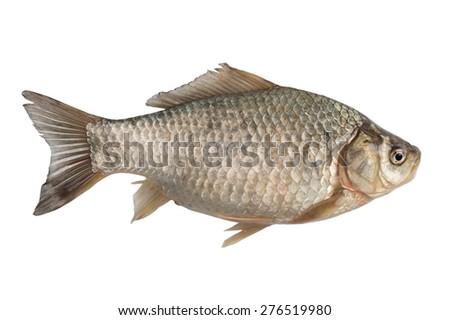 Freshly freshwater fish Crucian carp (Carassius auratus gibelio) isolated on white - stock photo
