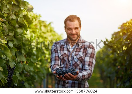 Freshly harvested blue grapes in the hands of farmers, toned - stock photo