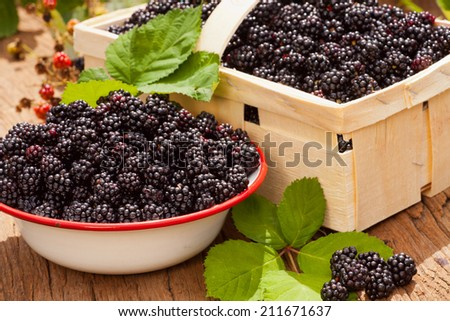 Freshly harvested forest blackberries in a bowl and fruit box on a rustic wooden table in the garden