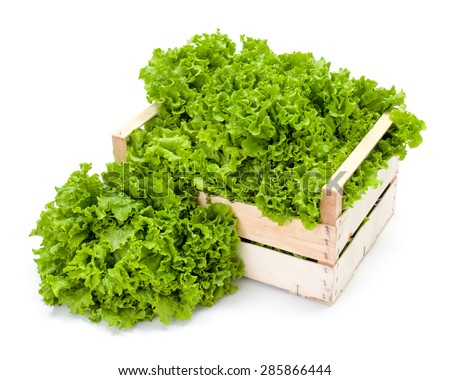 Freshly harvested green leaf lettuce in wooden crate - stock photo