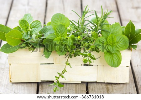 Freshly harvested herbs in a basket - stock photo