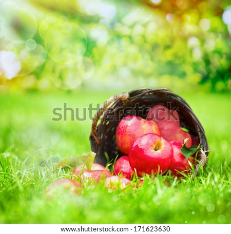 Freshly harvested juicy red apples in a wicker basker tipped on its side on lush green grass in a summer garden - stock photo