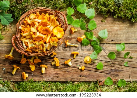 Freshly harvested mushrooms in the forest - stock photo