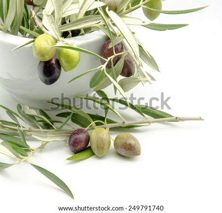 Freshly harvested olives - stock photo