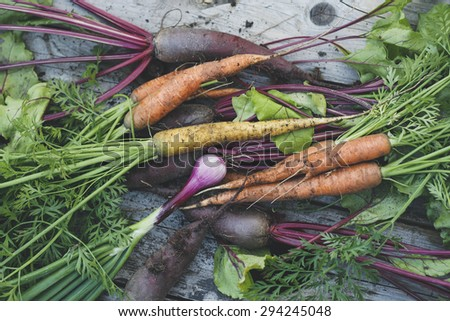Freshly harvested organic carrots, beets and onions - stock photo