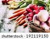 Freshly harvested organic vegetables  - stock photo