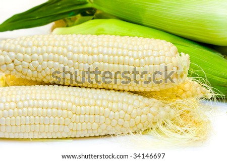 Freshly harvested white corn in close up view