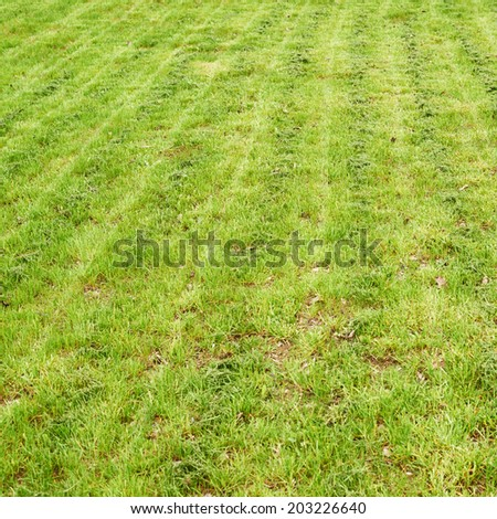 Freshly manicured grass lawn as a nature background composition - stock photo