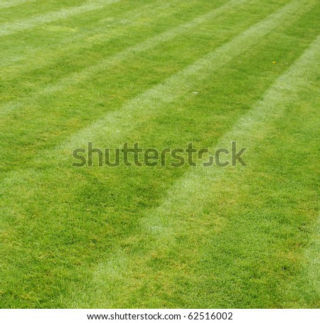 freshly mown grass showing stripes