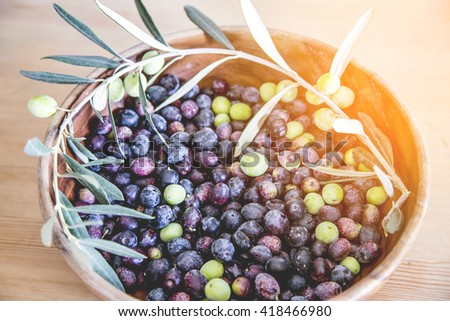Freshly picked Aegean olives, green, purple and black olives - stock photo