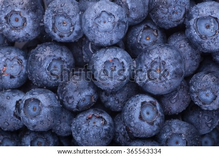 Freshly picked blueberries - stock photo