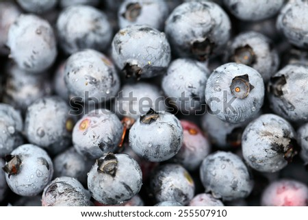 Freshly picked blueberries. Close up - stock photo