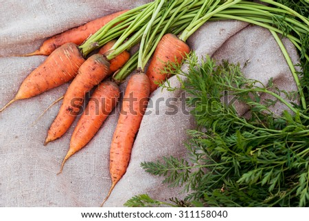 freshly picked carrots with green leaves on rustic background - stock photo
