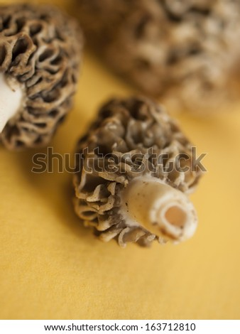 Freshly picked  flavorful morel mushrooms. Shallow DOF.