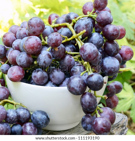 Freshly-picked grapes in the cup - stock photo