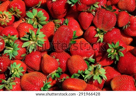 Freshly picked of  red strawberries, tasty background - stock photo