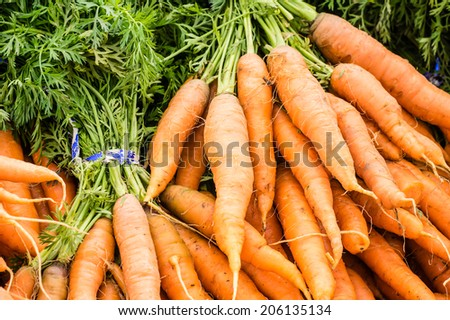 Freshly picked orange carrots on display at the farmers market - stock photo