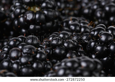 freshly picked organic blackberries - stock photo