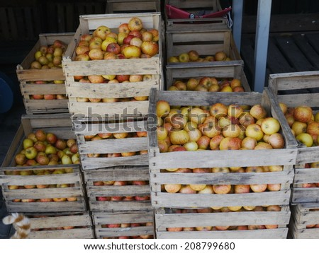 Freshly picked red apples in a crate, with apple tree in the background. - stock photo