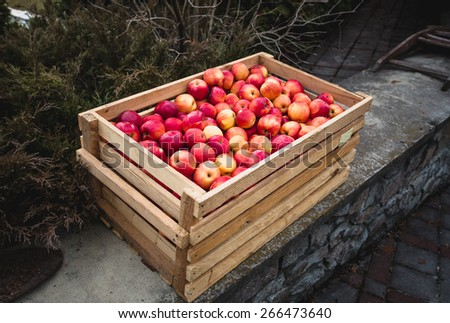 Freshly picked red apples in big wooden crate - stock photo